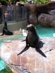 Seals!!!